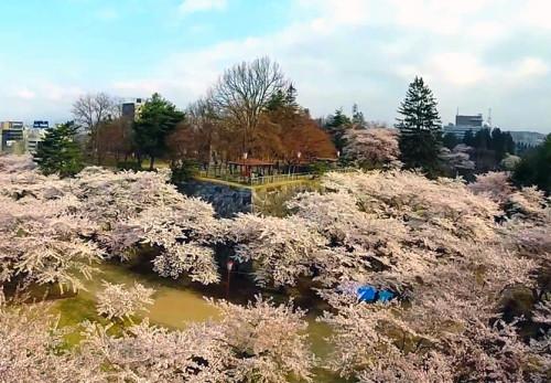 春の盛岡城跡公園を空撮動画