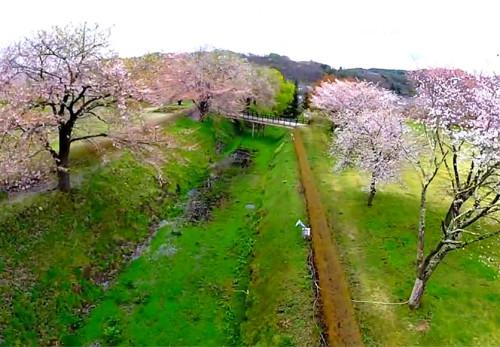 桜の九戸城址を空撮動画