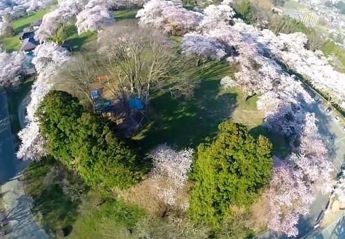 桜の城山公園を空撮動画