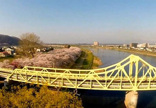 桜の展勝地を空撮動画