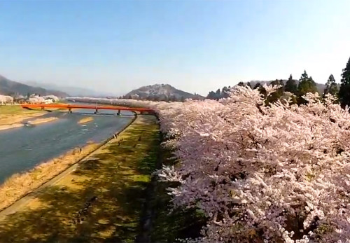 角館の桜を空撮動画