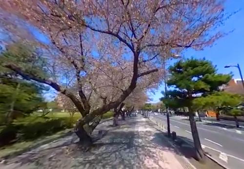 十和田市桜並木をモーションVR