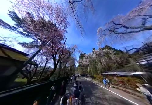 角館の桜並木をモーションVRで