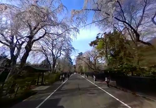 角館桜並木をモーションVR